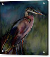 Blue Heron Painting II Acrylic Print by Don  Wright