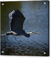Blue Heron Skies  Acrylic Print by Saija  Lehtonen