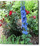 Blue Hollyhock And Red Roses Acrylic Print by Corey Ford