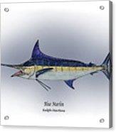 Blue Marlin Acrylic Print by Ralph Martens