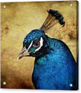 Blue Peacock Acrylic Print by Angela Doelling AD DESIGN Photo and PhotoArt