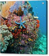 Blue Starfish On Coral Reef, Raja Acrylic Print by Beverly Factor