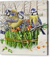 Blue Tits In Leaf Nest Acrylic Print by EB Watts