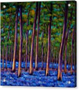 Bluebell Wood Acrylic Print by Johnathan Harris