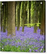 Bluebells Acrylic Print by Jane Rix