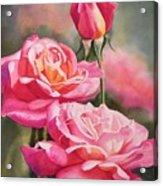 Blushing Roses With Bud Acrylic Print by Sharon Freeman