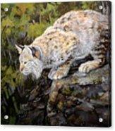 Bobcat Acrylic Print by Mary Ann Cherry