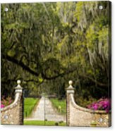 Boone Hall Plantation Acrylic Print by Eggers   Photography
