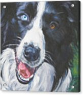 Border Collie Acrylic Print by Lee Ann Shepard