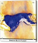 Borzoi Blue Flight Acrylic Print by Kathleen Sepulveda