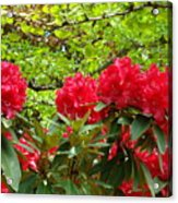 Botanical Garden Art Prints Red Rhodies Trees Baslee Troutman Acrylic Print by Baslee Troutman