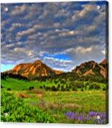 Boulder Spring Wildflowers Acrylic Print by Scott Mahon