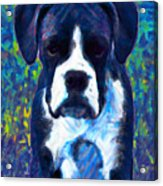 Boxer 20130126v5 Acrylic Print by Wingsdomain Art and Photography