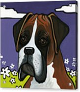 Boxer Acrylic Print by Leanne Wilkes