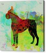Boxer Watercolor Acrylic Print by Naxart Studio