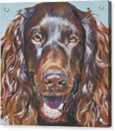 Boykin Spaniel Acrylic Print by Lee Ann Shepard