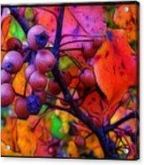 Bradford Pear In Autumn Acrylic Print by Judi Bagwell