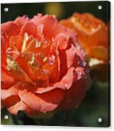 Brass Band Roses Acrylic Print by Rona Black