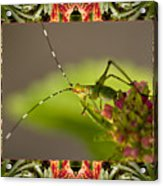 Bromeliad Grasshopper Acrylic Print by Bell And Todd