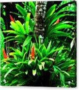Bromeliads El Yunque National Forest Acrylic Print by Thomas R Fletcher