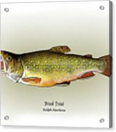 Brook Trout Acrylic Print by Ralph Martens
