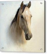 Buckskin Beauty Acrylic Print by Betty LaRue