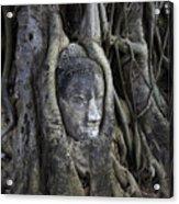 Buddha Head In Tree Acrylic Print by Adrian Evans