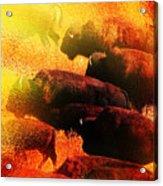 Buffalo Sun Acrylic Print by Terril Heilman