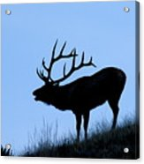 Bull Elk Silhouette Acrylic Print by Larry Ricker