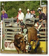 Bull Rider Acrylic Print by Phyllis Britton