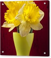 Bunch Of Daffodils Acrylic Print by Garry Gay