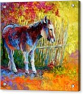 Burro And Bouganvillia Acrylic Print by Marion Rose