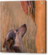 Buster And Dawg Acrylic Print by Carol Walker