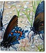 Butterflies Original Oil Painting Acrylic Print by Natalja Picugina