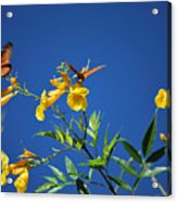Butterfly In The Sonoran Desert Musuem Acrylic Print by Donna Greene
