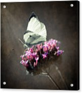 Butterfly Spirit #02 Acrylic Print by Loriental Photography