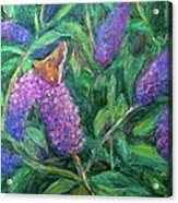 Butterfly View Acrylic Print by Kendall Kessler
