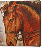 Caballo I Acrylic Print by Jose Espinoza