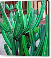 Cactus Fly By Acrylic Print by Snake Jagger