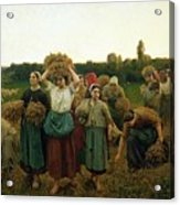 Calling In The Gleaners Acrylic Print by Jules Breton