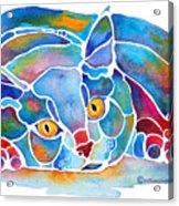 Calypso Cat Acrylic Print by Jo Lynch