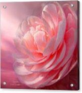 Camellia Acrylic Print by Carol Cavalaris