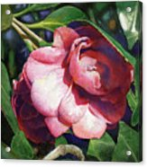 Camellianne Acrylic Print by Andrew King