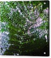 Canopy Of Ferns Acrylic Print by Elizabeth Hoskinson