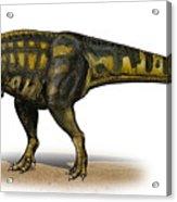 Carcharodontosaurus Iguidensis Acrylic Print by Sergey Krasovskiy