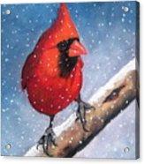 Cardinal In Winter Acrylic Print by Joyce Geleynse