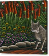Cat - Bob The Bobcat Acrylic Print by Carol Wilson