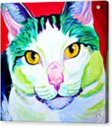 Cat - Zooey Acrylic Print by Alicia VanNoy Call
