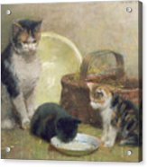 Cat And Kittens Acrylic Print by Walter Frederick Osborne