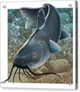 Catfish Acrylic Print by Valer Ian